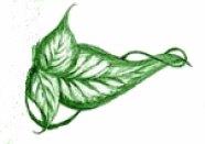 leaf_from_logo copy